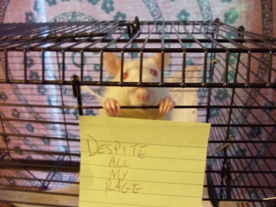 despite-all-my-rage-rat-cage-550x412
